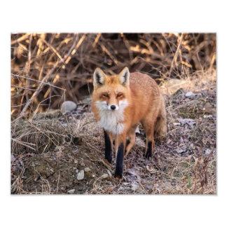 Impression Photo fin de Fox 14x11 rouge et personnel