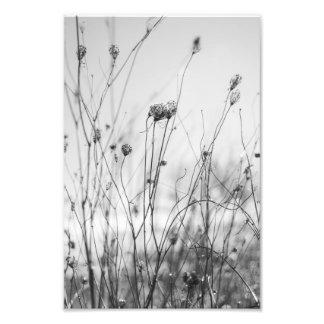 Impression Photo Fleurs d'hiver