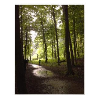 Impression Photo Forêt après la pluie