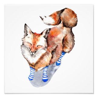 Impression Photo Fox dans les chaussettes