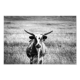 Impression Photo Jeune Longhorn