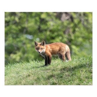 Impression Photo Kit de Fox rouge