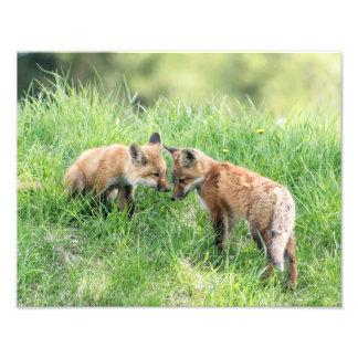 Impression Photo Kits de Fox rouge