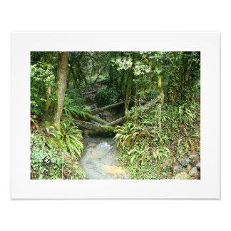 Impression Photo La forêt en bois de fougère laisse à l'Orégon la