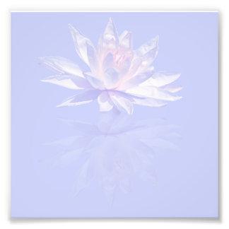 Impression Photo Nénuphar rose et réflexion au-dessus de lavande
