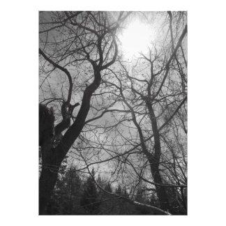 Impression Photo Noir abstrait et blanc du soleil d'arbre