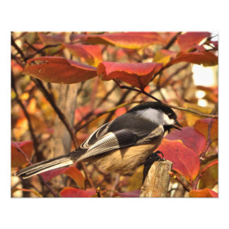 Impression Photo Oiseau blanc de Chickadee de noir de feuille