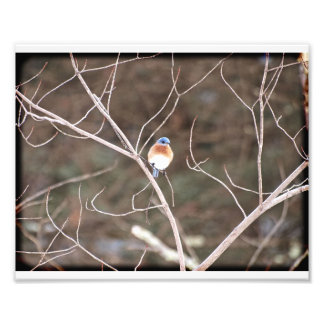 Impression Photo Oiseau bleu 01