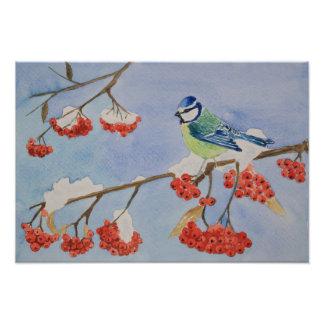 Impression Photo Oiseau bleu sur une branche d'arbre de sorbe