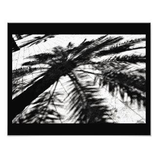 Impression Photo Ombre de palmier-dattier