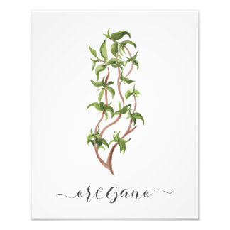Impression Photo Origan botanique d'impression d'herbe d'aquarelle