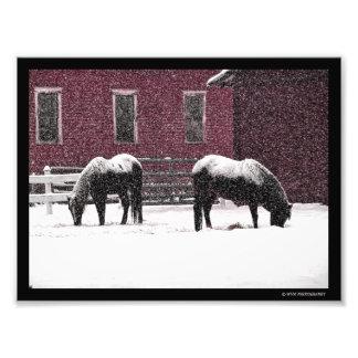Impression Photo Pâturage d'hiver
