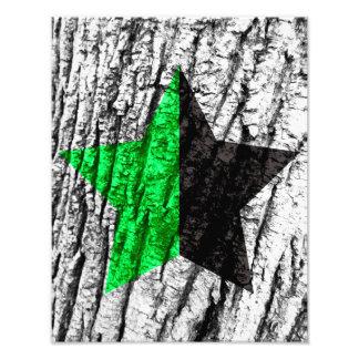 Impression Photo Peau verte d'étoile d'anarchie d'arbre