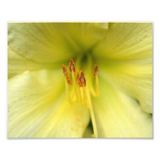 Impression Photo Plan rapproché asiatique jaune pâle de lis