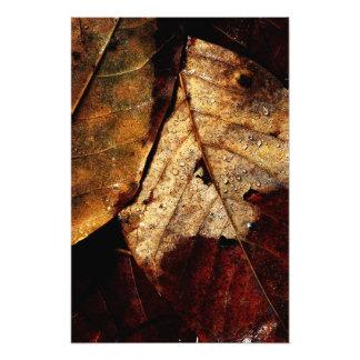 Impression Photo Plancher de forêt