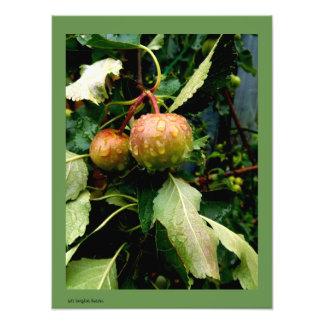 Impression Photo Pommes en automne