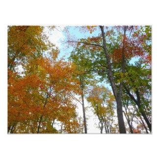 Impression Photo Recherche à tomber feuillage d'automne coloré du