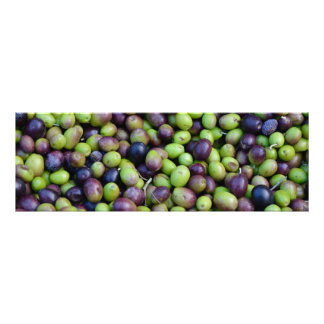 Impression Photo Récolte de chute en Toscane, olives