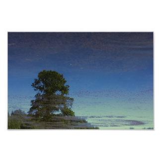 Impression Photo Réflexion d'arbre dans l'eau