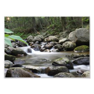 Impression Photo Ruisseau d'orignaux
