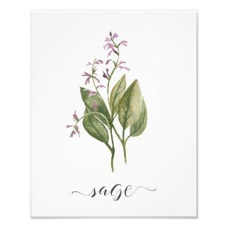 Impression Photo Sauge botanique d'impression d'herbe d'aquarelle