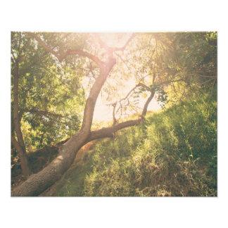 Impression Photo Sun et arbres