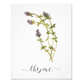 Impression Photo Thym botanique d'impression d'herbe d'aquarelle