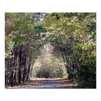 Impression Photo Une promenade dans les bois