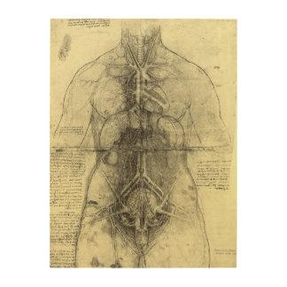 Impression Sur Bois Anatomie humaine, torse femelle par Leonardo da