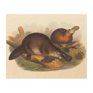 Impression Sur Bois Animaux de l'Australie l'ornithorynque affiché par