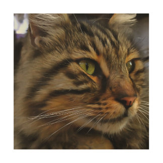 Impression Sur Bois Aslan le chat tigré aux cheveux longs