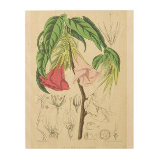Impression Sur Bois Belle illustration de faune de Ste.Hélène
