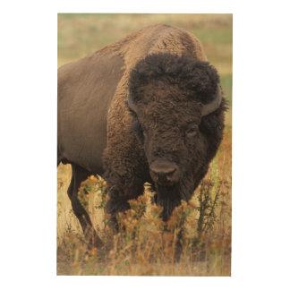 Impression Sur Bois Bison américain