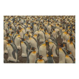 Impression Sur Bois Colonie de pingouin de roi, Malouines