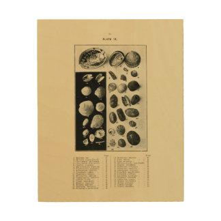 Impression Sur Bois Coquilles de NZ - Paua etc.
