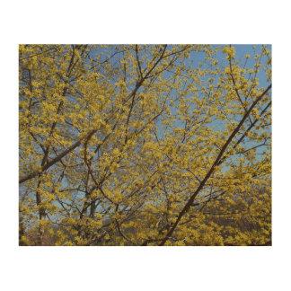Impression Sur Bois Cornouiller de cerise de cornaline et ciel bleu