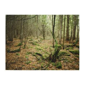 Impression Sur Bois Dans la forêt