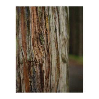Impression Sur Bois Écorce sur le bois