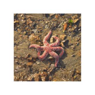 Impression Sur Bois Étoiles de mer solitaires