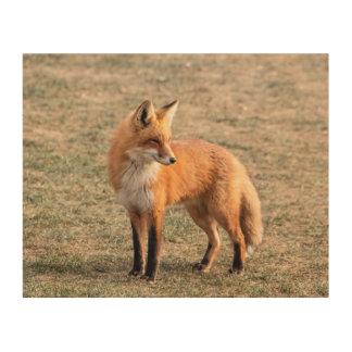 Impression Sur Bois Fox 10x8 rouge dans un domaine