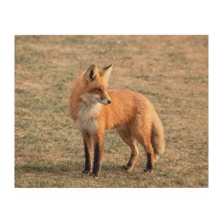 Impression Sur Bois Fox 14x11 rouge dans un domaine
