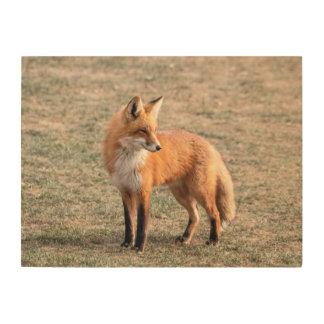 Impression Sur Bois Fox 24x18 rouge dans un domaine