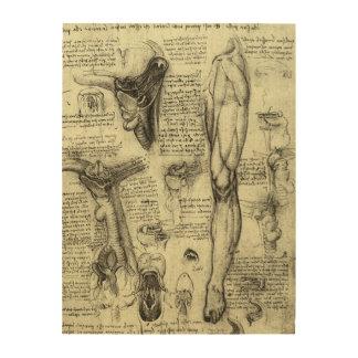 Impression Sur Bois Jambe humaine vintage Leonardo da Vinci de larynx