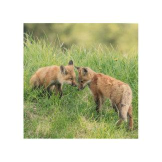 Impression Sur Bois Kits de Fox rouge