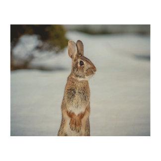 Impression Sur Bois lapin 10x8 dans la neige