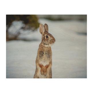 Impression Sur Bois lapin 14x11 dans la neige