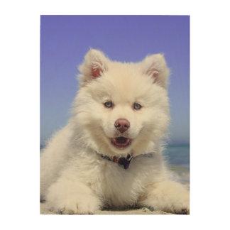 Impression Sur Bois Lapphund finlandais adorable à la plage