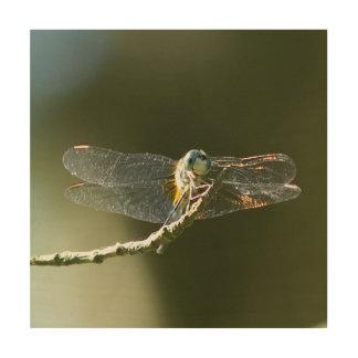 Impression Sur Bois Libellule, copie en bois de photo