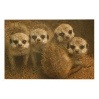 Impression Sur Bois Meerkats de bébé