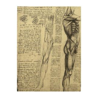 Impression Sur Bois Muscles masculins d'anatomie humaine par Leonardo
